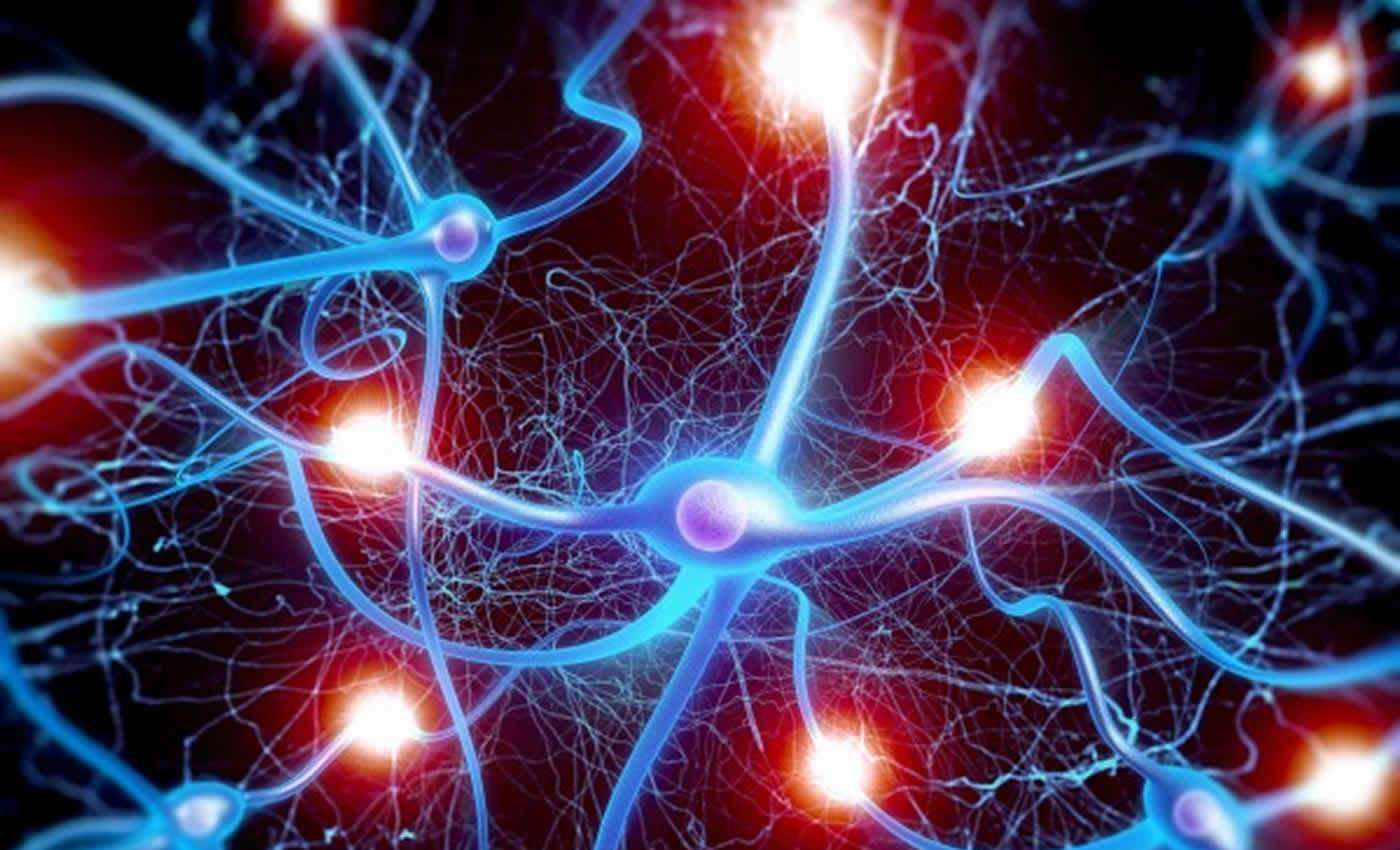 Neurons that fire together, wire together | Josep Soler & Dirk Terpstra